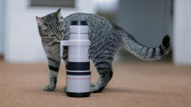 「目に強い光を長時間照射すると網膜に障害が出るということは、犬を含む多くの動物で報告されています」(小林義崇院長)