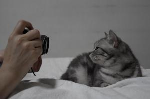 猫をフラッシュ撮影したら、失明する?