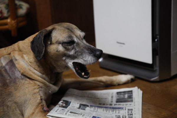 【読者投稿】明日から仕事~ふわ~。。新聞読んでから寝ますかねえ。。 #かっこよく新聞読む