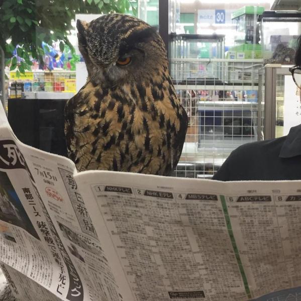 森の賢者も熟読。さすがホー先生。 #いちからわかる #かっこよく新聞読む