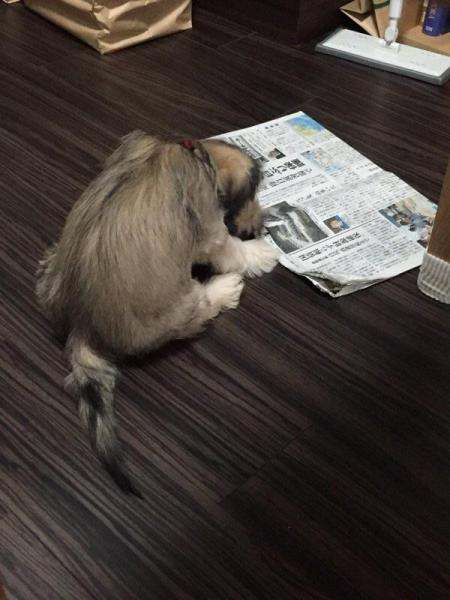 読んでるのか? #かっこよく新聞読む