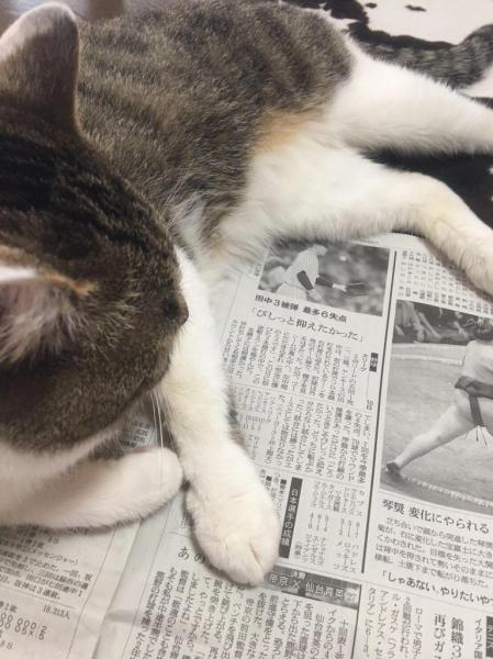自由な猫は横から #かっこよく新聞読む