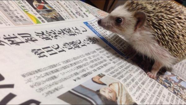 とがってる僕も #かっこよく新聞読む