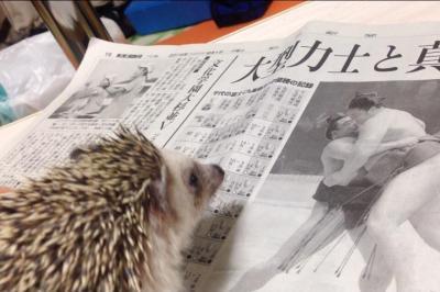 「がっぷり組んでみたい…」尖ってるぼくも #かっこよく新聞読む