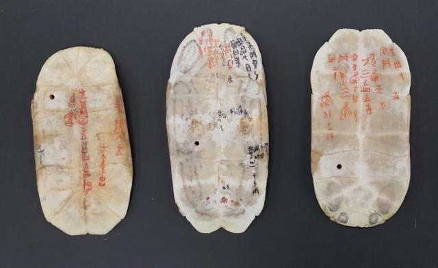 池田教授が指導し、学生たちがカメの甲羅に刻した甲骨文字。古代中国の文字をお手本にした。