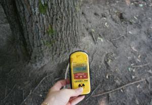 木の根もとで突然上がった線量。目に見えないのでぞっとした=水野梓撮影
