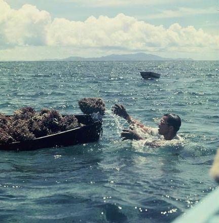 中学時代にいじめを受けた「SEALDs」創設メンバーの奥田愛基さんが移住した沖縄の鳩間島