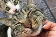 ツイッターで人気の「桶川猫」