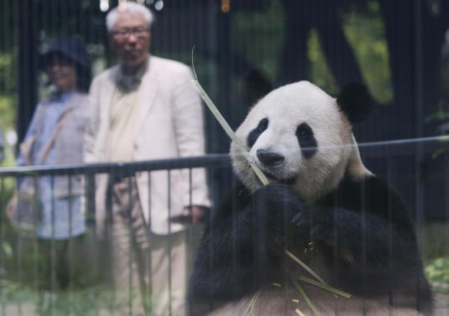 上野動物園の雄パンダ、リーリー=2012年6月