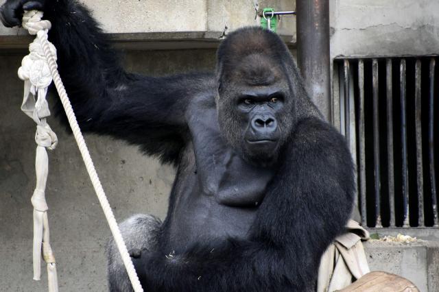 東山動植物園で人気のシャバーニ=名古屋市千種区