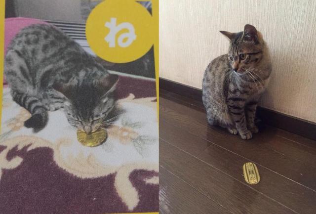 学生が撮った「猫に小判」の2パターン。左はNGテイク、右はOKテイク