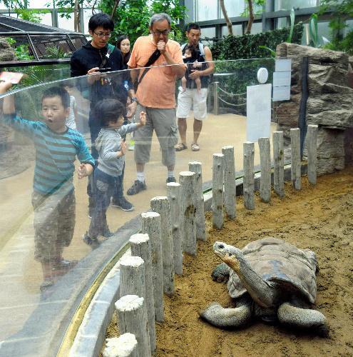 上野動物園のガラパゴスゾウガメのカメ吉=2016年9月19日