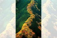 天に昇る龍のような紅葉=奈良県上北山村のナメゴ谷周辺、内田光撮影