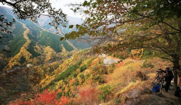 見頃を迎えるナメゴ谷の紅葉=内田光撮影