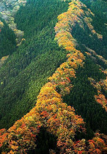 尾根筋が色づいたナメゴ谷の紅葉=奈良県上北山村、内田光撮影