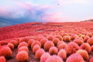 えっ、これどこ? 世界的インスタグラマーが撮った「不思議な日本」