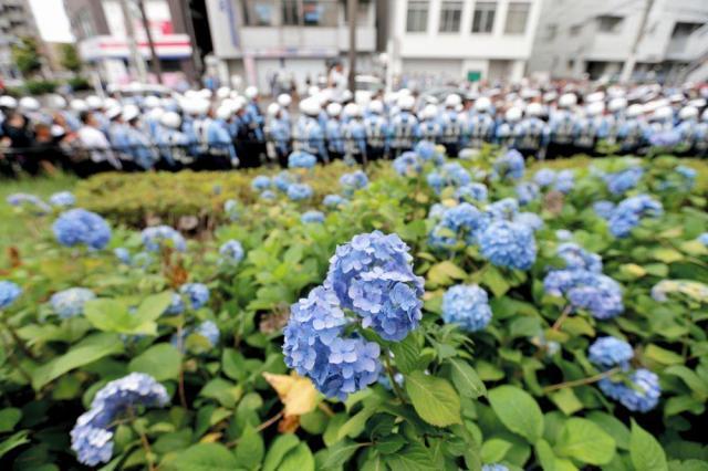 川崎市中原区でのヘイトスピーチのデモ会場近くで咲いていたアジサイ=2016年6月5日、杉本康弘撮影