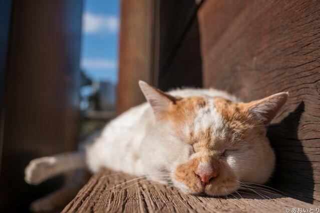 リラックスした猫の表情をとらえるあおいとりさんの写真
