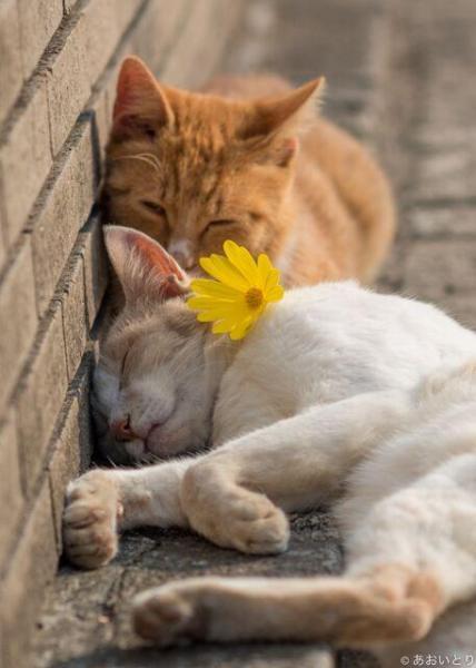 誰かがのせた花をそのままにして、うとうと