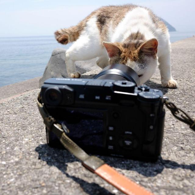写真集「気ままに猫だもん。」に収録されている1枚。好奇心旺盛な猫はカメラに近寄ってくることも