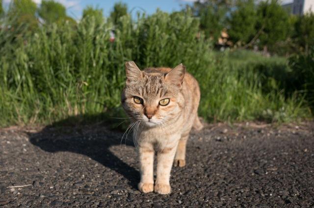 ちょっとぶすっとした表情ながら、カメラに近づいてくるツンデレ猫。あおいとりさんのお気に入りの1枚です