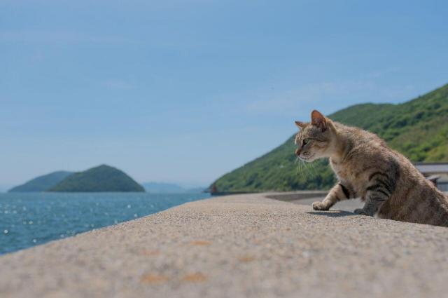 島の美しい空・海・自然をバックに。風景の中の猫を切り取るあおいとりさんならではの写真です