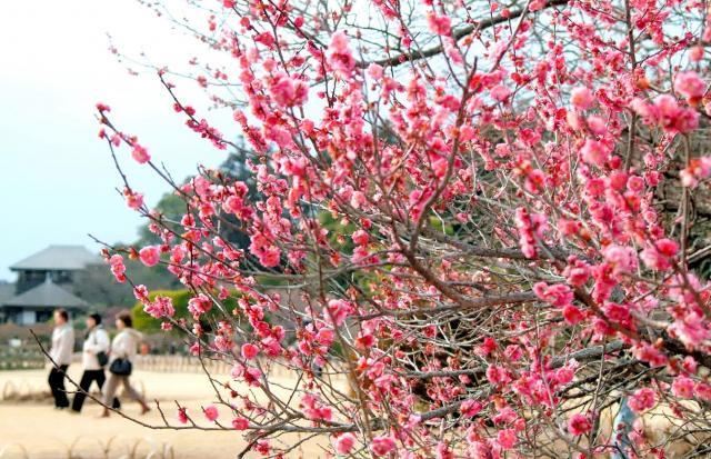 日本三名園のひとつ「偕楽園」もある。梅の名所としても知られる=2007年2月17日、久保智祥撮影