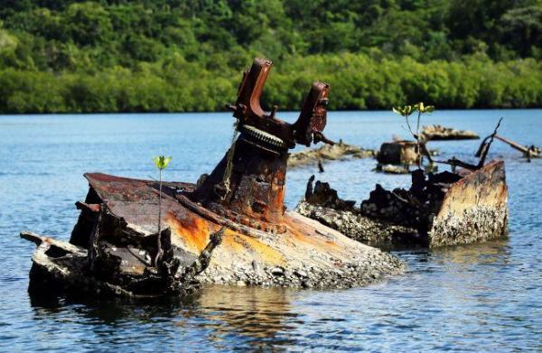 菊月の船体にはマングローブの若木が生えていた=ソロモン諸島・フロリダ島、橋本弦撮影