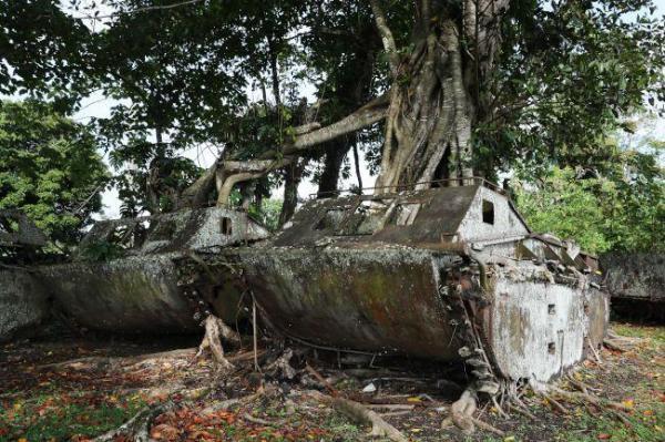 テテレ海岸の「博物館」に並べられた水陸両用トラクターからは大きな樹木が生え、時の流れを感じさせた=9月7日、ソロモン諸島・ガダルカナル島、橋本弦撮影