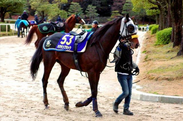 有馬記念に出走するキタサンブラック