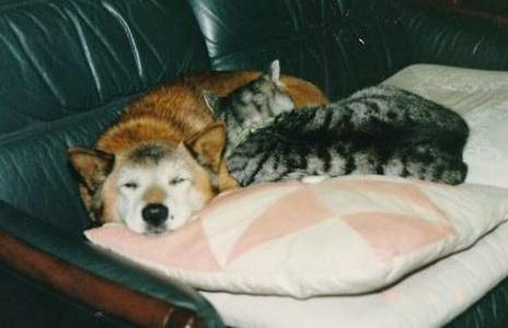 柴犬「こたろう」(左)と一緒に眠るたら