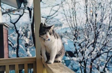 雪の日に外で遊ぶたら