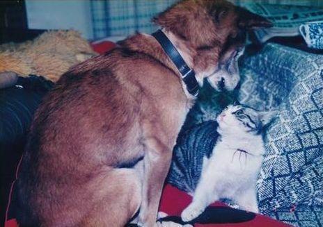 たら(右)と柴犬「こたろう」