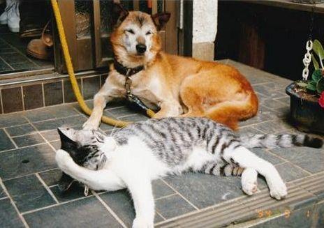 たら(左)と柴犬「こたろう」
