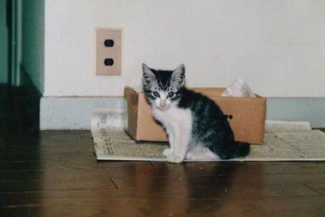 20年連れ添った猫「たら」