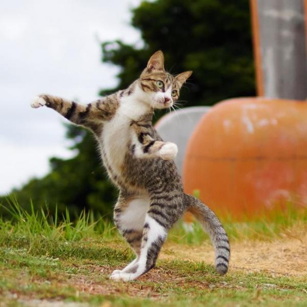 久方さんが撮影した猫たち