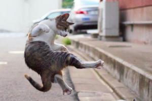 のら猫が飛び蹴り?正拳突き? 話題の写真、撮影の「秘密道具」は…