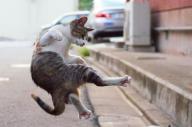 飛び蹴りするのら猫? 撮影の「秘密道具」とは?=『のら猫拳』(エムディエヌコーポレーション)
