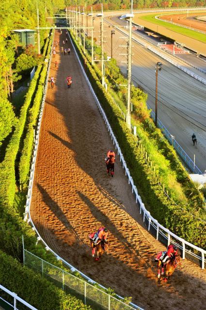 朝日を浴びて、栗東トレーニングセンターの坂路コースを駆け上がるサラブレッド