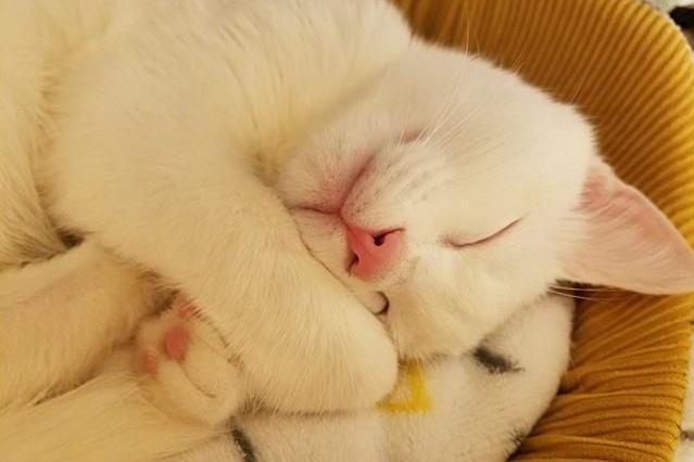 SNSのネコ人気、なんでこんなにメロメロになるんだろう…