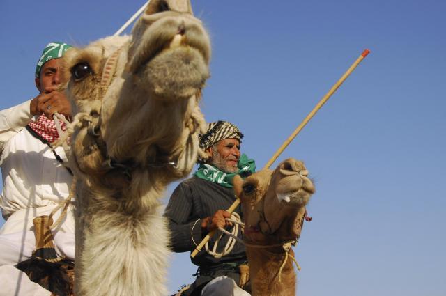 ラクダに乗り、祝い事をするサウジアラビアの人々=2012年5月、サウジアラビア・タブーク