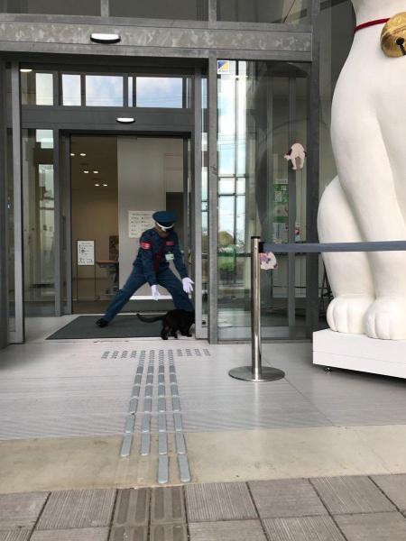 猫まみれ展の会場に入ろうとする猫と、阻止する警備員