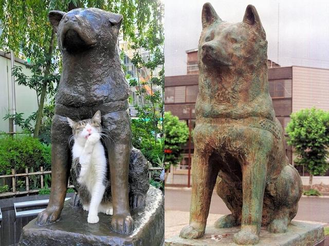 渋谷駅前のハチ公像(左)と大館駅前の銅像。渋谷のハチ公像は左耳が垂れている