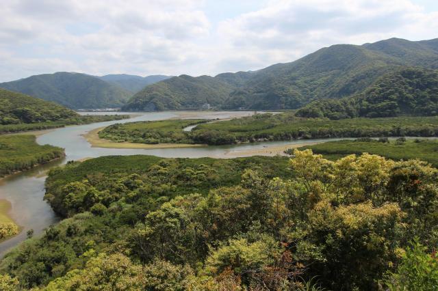 カヌーはマングローブが覆いかぶさるように生える住用川でこぐことができる