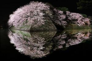 ライトアップされない桜並木…カメラマンが惚れ込んだ「関西の花見」