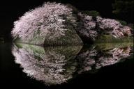 ライトアップされた桜。お堀の水面にも夜桜が浮き上がり、上下対称の世界が現れた=2017年4月10日、滋賀県彦根市の彦根城、上田潤撮影