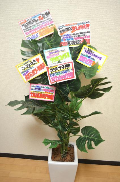 せっかくなので、観葉植物にPOPを飾ってみました。カラフルで画になりますね