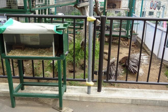 ヤマアラシのすぐ手前に置かれた箱でハリネズミが飼育されている