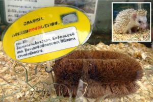 ハリネズミが「たわし」に… 市営の動物園、体調に応じて展示交代