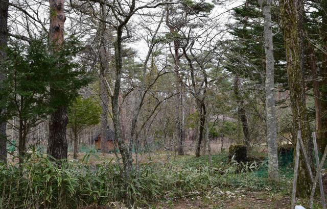 スタジオとなった民家の庭から見えた木々